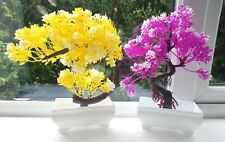 2 x Fish Tank Bonsai Trees New