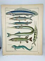 Antique large hand-colored print 1843.Oken's Naturgeschichte Plate 56 Fish