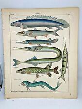 Antique large hand-colored print 1843.Oken's Naturgeschichte Plate 56 Fish
