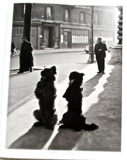 Robert Doisneau TWO DOGS STANDING AT ATTENTION France's Soldiers in WWII?