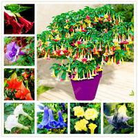100 Seeds Datura Bugmansia Angel Flowers Tree Beautiful Bonsai Plants in Garden