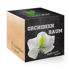 Feel Green Orchideenbaum Ecocube pflanze Im Holzwürfel
