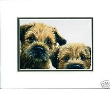 Border terrier card, mounted ready to frame. Paul Doyle