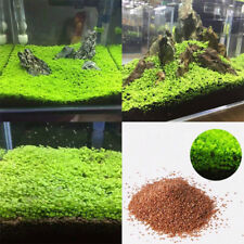 Fish Tank Decor Aquarium Plant Seeds Aquatic Double Leaf Carpet Water Grass