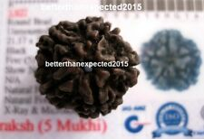 LAB CERTIFIED BLACK RUDRAKSHA RAREST RUDRAKSH PROTECT FROM EVIL SPIRIT ENERGIZED