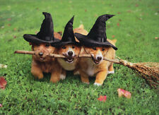 3 Dogs With Witches Broom Avanti Funny Halloween Card Greeting Card by Avanti