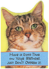 Dont Overdo It Recycled Paper Greetings Funny Birthday Card From The Cat