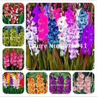 100 PCS Seeds Gladiolus Bonsai Flowers Perennial Plants Rare Sword Lily 2019 New