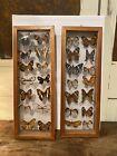 Vintage Real Framed Pair Butterfly Taxidermy Specimen Mid Century Art Display