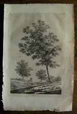 Gravure XVIIIème sur vergé botanique etching engraving stampa