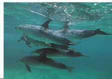 Animal Postcard - Marine Mammals - Five Dolphins Swimming   7005