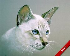 Colorpoint Shorthair Cat W Blue Eyes Animal Cats Painting Art Real Canvas Print