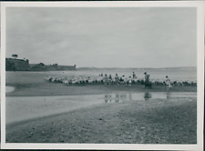 New Zealand, Sheeps on the beach in the The North Island  Vintage silver print.