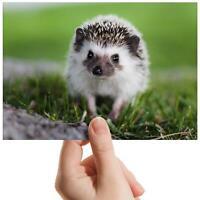 "Hedgehog English Countryside Small Photograph 6""x4"" Art Print Photo Gift #16335"