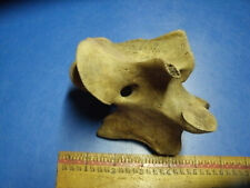 Fossil Bison Axis Vertebra From Geary Co. Kansas