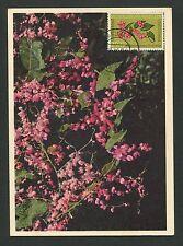 NEDERLANDSE ANTILLEN MK 1964 FLORA LIANE CORAIL MAXIMUM CARD MC CM d3713