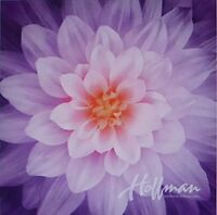 Dream Big~Orchid~Digital Floral Panel 43'' x 43'' Cotton Fabric by Hoffman