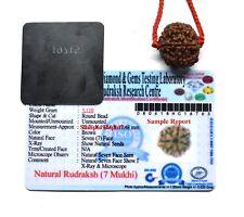 7 Mukhi Rudraksha / Seven Face Rudraksha Nepal Bead Lab Certified Size 18-20 MM