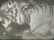 16mm Castle Films CAGED FURY animals lion tiger fight Adventure Parade circus