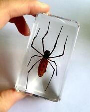 T-01 Real Spider Insect Specimens In Lucite Paperweight Acrylic Crafts