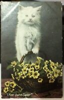 Postcard Vintage Animal Cat I feel Quite Clever - posted 1911
