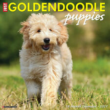Just Goldendoodle Puppies(dog breed calendar) 2021 Wall Calendar (Free Shipping)