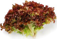 Rare Seeds Lettuce Salad Lollo Rossa Organically Grown Heirloom Vegetable