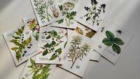 Vintage Soviet postcards Hazardous Poisonous Plants Catalog USSR