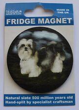 Shih Tzu - Dog - Fridge Magnet - Welsh Slate