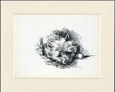 CAIRN TERRIER HEAD STUDY 1930'S DOG ART PRINT by MAC LUCY DAWSON READY MOUNTED