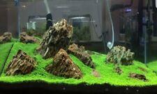 "Fish Tank / Aquarium Plant Grass Seeds ""Australia""  50 SEEDS - UK SELLER"