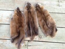 XL Northern Muskrat Pelt Fur Hide Tanned taxidermy deer fox coyote mink beaver