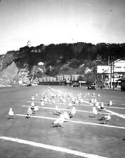 c.1930s SAN FRANCISCO SEAGULLS w/TOPSY'S ROOST & SUTRO HEIGHTS~ORIGINAL NEGATIVE