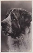 VINTAGE POSTCARD ST. BERNARD LIFE'S A WORRYING BUSINESS Raphael Tuck & Sons Dogs