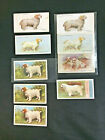 Clumber Spaniel Cigarette Tabacco card collection of 9 Imperial Player Gallaher