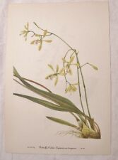 Set of 10 Vintage MARY WALCOTT Botanical Wildflower Art Prints ORCHIDS