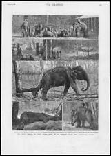 1882 Antique Print - SRI LANKA CEYLON ROYAL PRINCES VISIT ELEPHANT KRAAL (198)