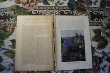 1929 Fachbericht Vh 241 Rittersporn