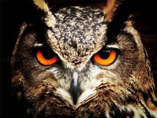 Owl Nature Art Posters