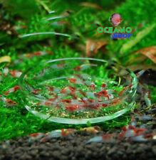 Plato 6 cm  alimentador de gambas de cristal para gambarios