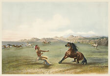 George Catlin's Indian Gallery: Reining in a Wild Horse - Fine Art Print