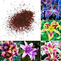 50PCS RARE LILY FLOWER SEEDS PLANTING FLOWERS LILIUM PERFUME GARDEN DECOR STRICT