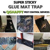 Mice Rat Mouse LARGE Glue Traps Sticky Bug Pest Rodent Control Baited Safe