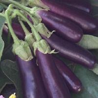 300 Long Purple Italian Egg plant Seeds eggplant Seeds