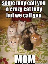 "FUNNY CAT MEME ""CRAZY CAT LADY"" FRIDGE MAGNET 5' X 3.5'"