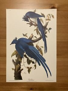 Vintage John J Audubon Columbia Jay Print No. 20 Plate 96 R. Havell 1830