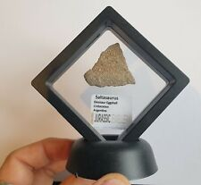 Slice of Atlasaurus Dinosaur Bonel in Floating Frame -