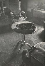 DALI CAT CHAT CARTE POSTALE PHOTO PHILIPPE HALSMAN JUMPOLOLOGY POSTCARD