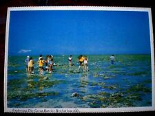 QLD 1970'S GREAT BARRIER REEF, EXPLORING AT LOW TIDE  Vintage Aust Postcard