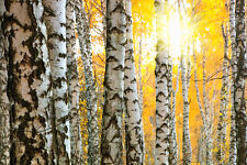 BEAUTIFUL BIRCH TREE FOREST CANVAS PICTURE #7 STUNNING NATURE LANDSCAPE CANVAS